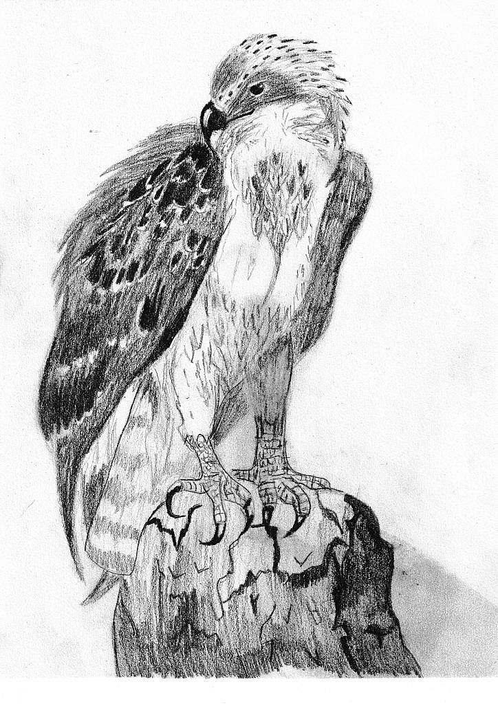 Bird of Prey by Bethany Duncan